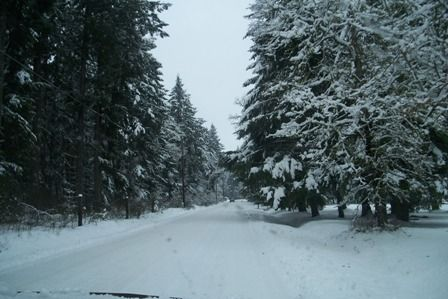Road out to our house, lots of snow for Washington